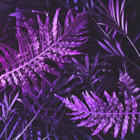 Disposition des feuilles violettes tropiques créatives. Concept surnaturel. Mise à plat. Couleurs ultra violettes. Banque d'images