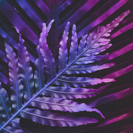 Creative tropic purple leaves layout. Supernatural concept. Flat lay. Ultra violet colors. Banque d'images