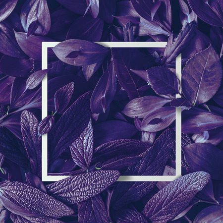 Creative tropic purple leaves layout. Supernatural concept. Flat lay. Ultra violet colors. Stock fotó