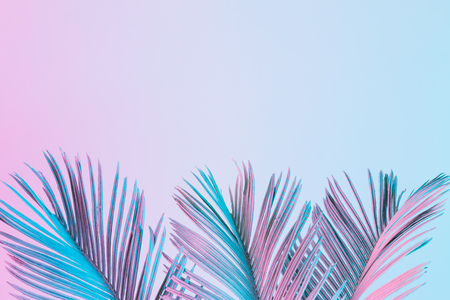 Tropical and palm leaves in vibrant bold gradient holographic colors. Concept art. Minimal surrealism. 스톡 콘텐츠