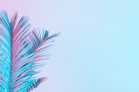 Tropical and palm leaves in vibrant bold gradient holographic colors. Concept art. Minimal surrealism. Zdjęcie Seryjne