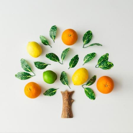 Árbol de cítricos, naranjas, limones, lima y hojas verdes sobre fondo brillante. Concepto de naturaleza laicos plana creativa.