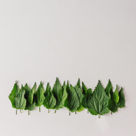 Creative nettle leaves layout. Minimal nature concept. Flat lay.