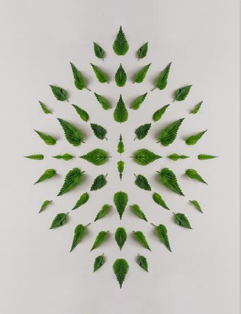 Creative nettle leaves geometric pattern. Minimal nature concept. Flat lay.