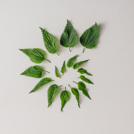 Creative nettle leaves geometric pattern. Minimal nature concept. Flat lay.