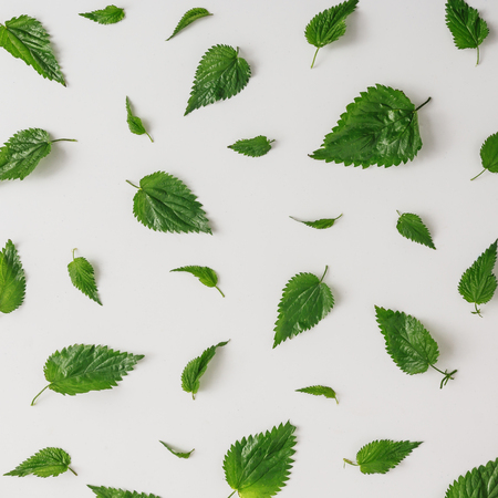 Creative nettle leaves pattern. Minimal nature concept. Flat lay. Green herbs texture. Banque d'images - 102403635
