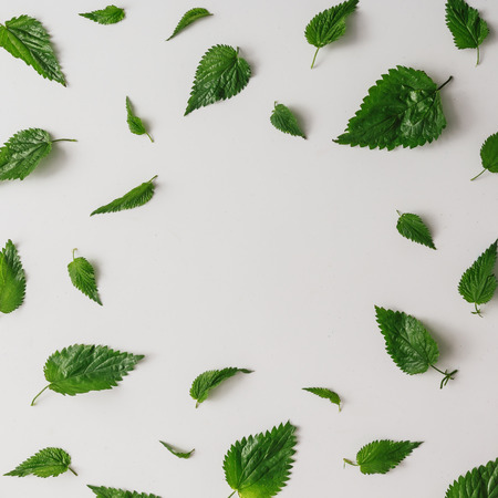 Creative nettle leaves pattern with copy space. Minimal nature concept. Flat lay. Green herbs texture.