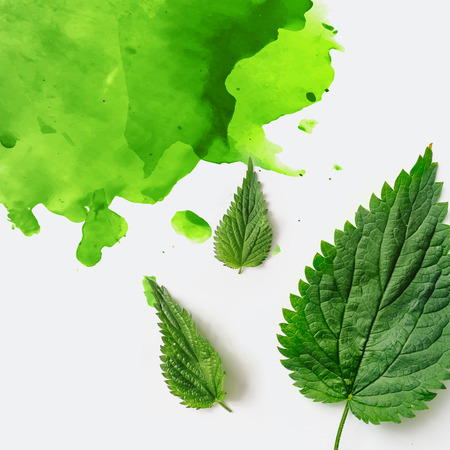 Green nettle leaves with green watercolor splash on bright background. Minimal nature concept. Flat lay Stockfoto