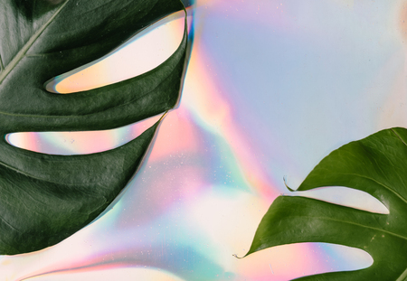 Iridescent background. Holographic Abstract soft pastel colors backdrop with monstera tropic leaves. Minimal concept.
