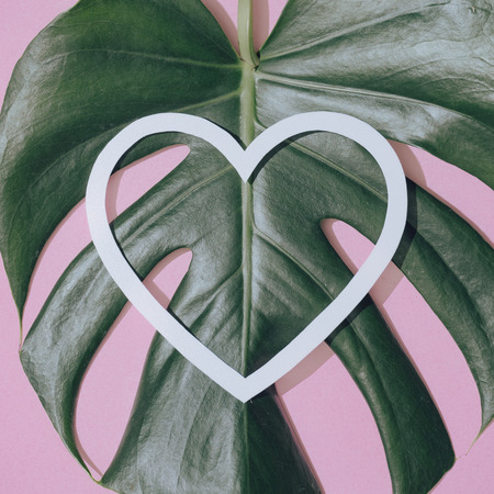 Monstera leaf on pastel purple background with heart shape. Minimal composition. Tropical flat lay.