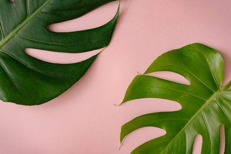 Monstera leaves on pastel coral background. Minimal composition. Tropical flat lay.
