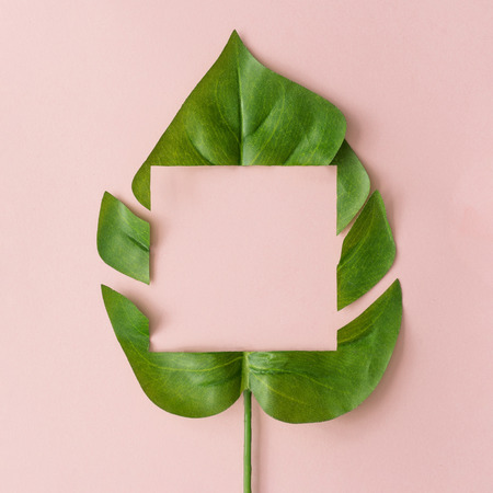 Creative layout made with cut out monstera leaf on pastel pink background. Minimal tropical nature composition with copy space. Imagens