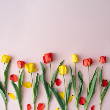 Creative layout made with red and yellow tulip flowers and leaves on pastel pink background. Minimal spring nature composition.