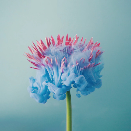 Pink daisy flower with pastel blue ink. Creative abstract spring nature. Summer bloom concept.
