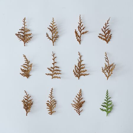 Creative winter layout made of pine tree branches. Christmas flat lay. Nature holiday season concept. Stock fotó