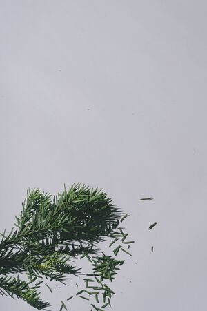 Christmas tree with pastel grey background and deep shadows. Minimal contemporary concept. Standard-Bild - 132617450