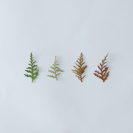Creative winter layout made of pine tree branches. Christmas flat lay. Nature holiday season concept. Stockfoto