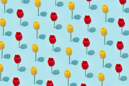 Creative layout made of spring tullip flowers. Nature background. Season minimal pattern. Imagens