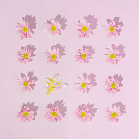 Pink pattern made with daisy flowers. Break the pattern or woman's day concept. Modern minimal flat lay. 版權商用圖片