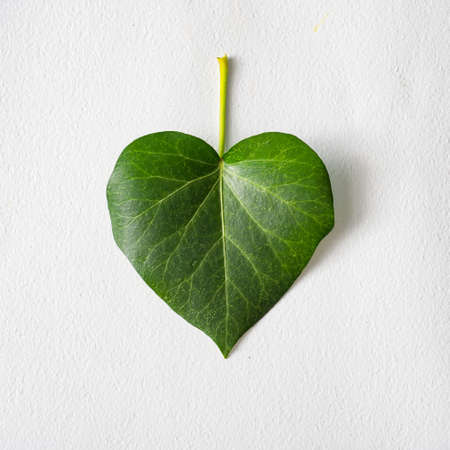 Leaf in shape of a heart. Love valentines or woman's day concept. Natural green leaf on bright background. Flat lay.