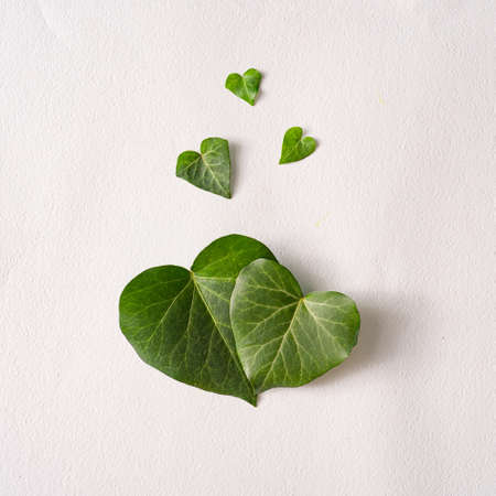 Love valentines concept. Heart shape leaves with paper card note. Minimal flat lay green background. Design valentine or woman's day template. 版權商用圖片