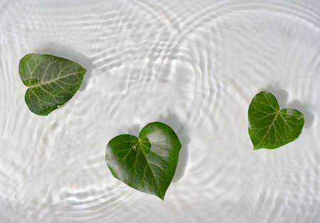 Heart shaped leaves in water. Minimal creative valentines or woman's day concept. Nature flat lay.