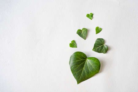 Heart shaped leaves on paper card background. Love valentines or woman's day concept. Minimal flat lay nature.