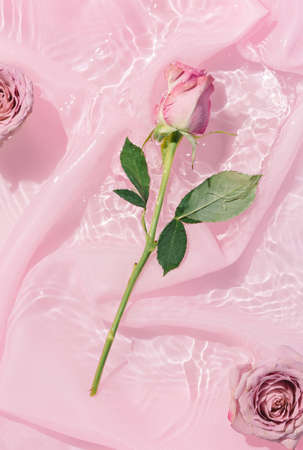 Pink rose flower bouquet in water with silk fabric. Valentines or woman's day background design. Minimal flat lay nature.