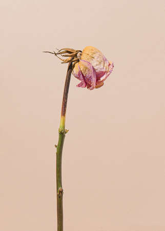 2021 Real unique still life composition. Beautiful dry flower. Creative retro minimal background.