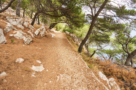 Gravel path in forest near Adriatic sea.