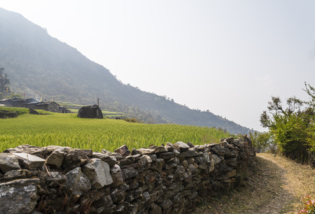 Green field and stone wall in Nepal photo