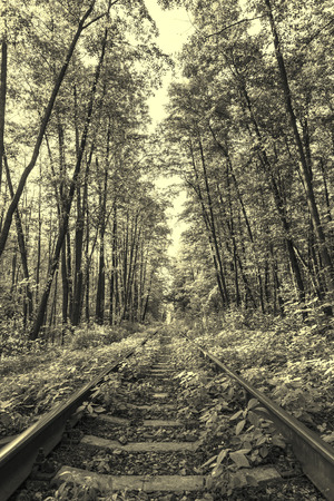 forest railway: Ancient style sepia photo of forest railway Stock Photo