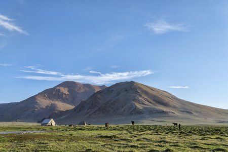 Tent and horses in mountains photo