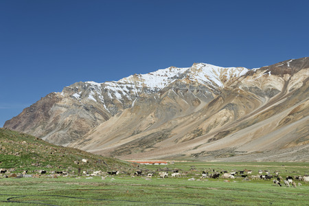 lots of sheep in mountains photo