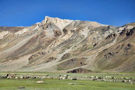 walking sheeps among mountains photo