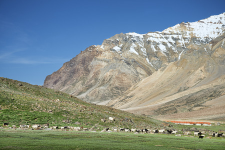a lot of sheep and goats in mountain valley photo