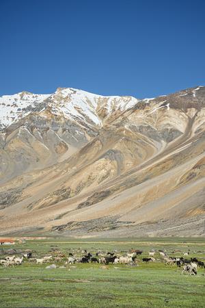 sheeps among mountains photo