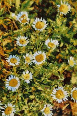 van gogh: Summer daisies oil painting Van Gogh style imitation Stock Photo