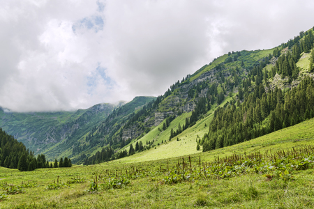 Alpine meadow somewhere in French alpes 版權商用圖片