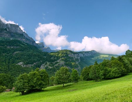 Green alpine meadow among trees clouds and mountains