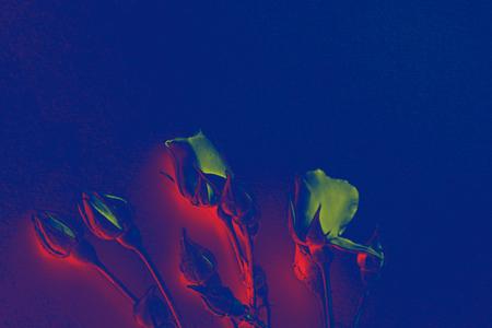 Roses - blue background - filter gradient map, abstrakt