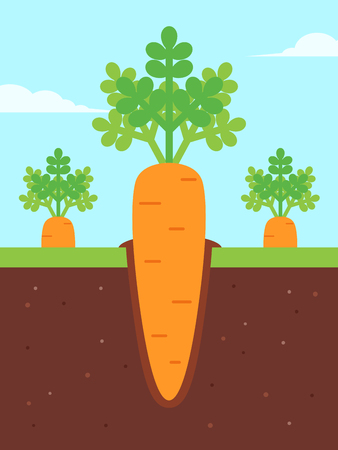 Carrots Growing in Ground. Flat Design Style,