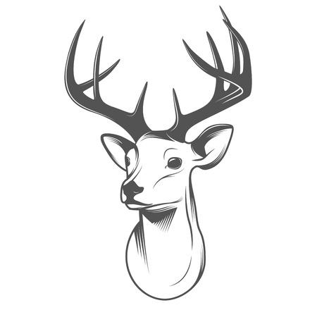 оленьи рога: Deer голову, изолированных на белом фоне Иллюстрация
