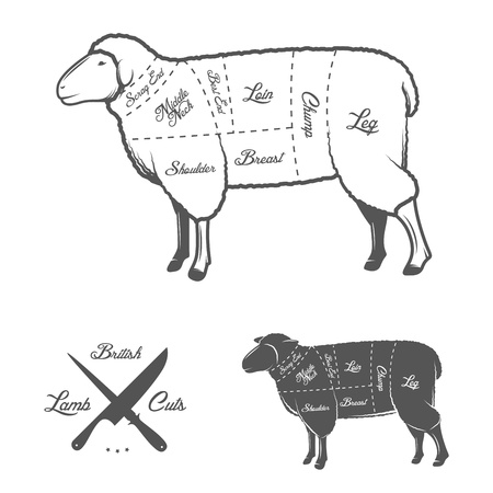 British  UK  cuts of lamb or mutton diagram Stock Vector - 21990988