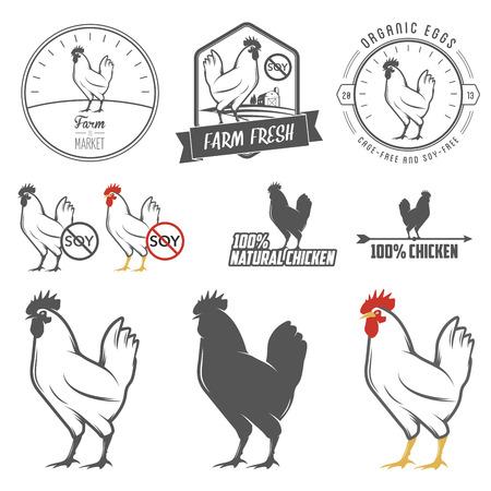 gallina con huevos: Conjunto de etiquetas de la carne de pollo de �poca y elementos de dise�o
