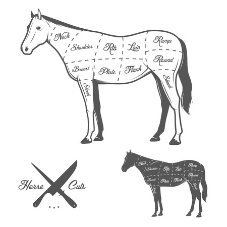 slaughter: Butchers cuts of horse diagram