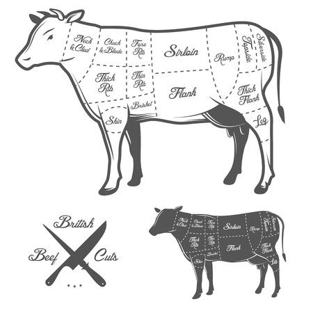 vaca: Cortes de carnicer�a brit�nicos del diagrama de la carne de vacuno Vectores