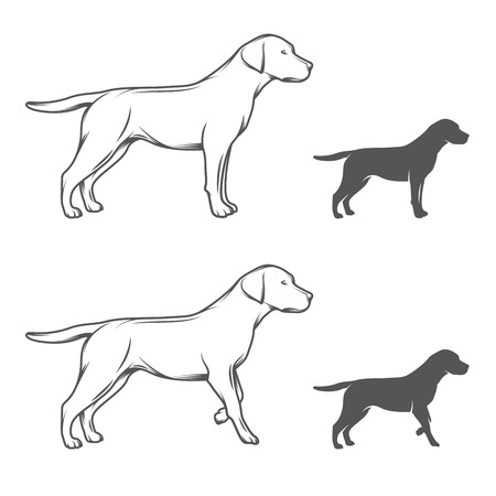yellow black: Illustration of a dog in different poses isolated on white background Illustration