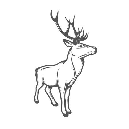 vuxen: Vuxen vilda rådjur med horn isolerad på vit bakgrund
