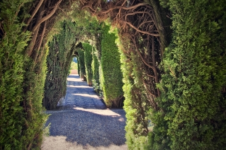 Path in a hedge in Generalife Garden in the Alhambra in Granada  Spain